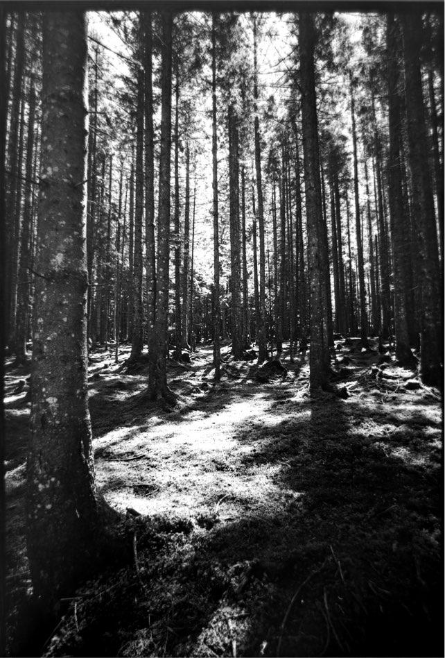 Gerner Wald