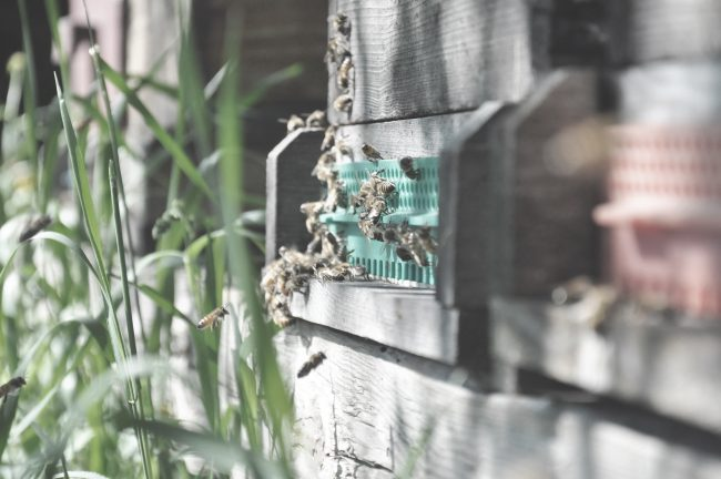 Gerner Biene